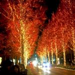 京都のクリスマスイルミネーション、ここのスポットへどうぞ!